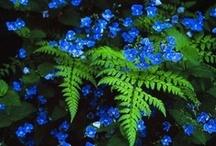 Gardening/Plants / Växter