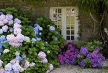 Great Gardens / beautiful gardens