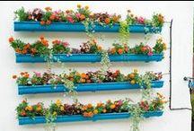 Plants, gardening / Plants