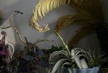 interiør med planter