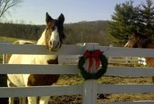Country Christmas / Merry Christmas from Riding & Writing! Cherokee, Ivy & Zubie !