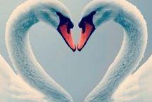 linnut / kuvia linnuista