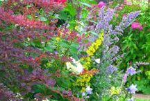 Planting Plans / Hambrooks offers Garden Design, Planting Plans, Landscaping & Maintenance throughout Hampshire