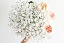 blooms / flowers, plants, pretty bouquets