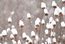 Winter Delights! / Be inspired by winter's beauty!