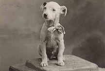 Old Photographys / portraits photography, victorian portrait photography, vintage images pictures photo photographs