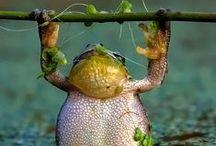 Frogs / by Alie Hoogenboezem-de Vries