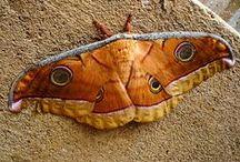 Butterflies and Moths / butterflies and moth