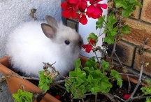 Life's a bunny! / A bunny cannot withhold bunniness, just as the sun cannot withhold light. -bunny buddhism
