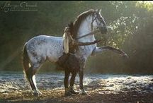 horses / ღ It's my passion,it's my life ♥ / by Greet Van Menten