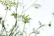 * Botanical *