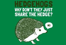 Hedgehogs / Why don't they just share the hedge? ;-)