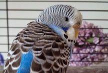 Birdies! / Birds
