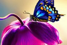 Butterflies / simply gorgeous