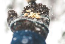 Seasons | Winterland