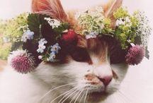 Seasons | Sweetness of Summer