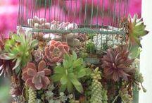 Cosas que me encantan de jardinería