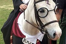 Halloween Horses / Horse costumes and participation in Halloween celebrations.