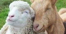 Tendresse, amour et animaux