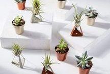 House Plants in Interior Design / A board celebrating House Plants & Urban Jungles