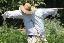 Stevia Anbau / Unsere Stevia-Pflanzen wachsen mit viel Sonne und Liebe auf!