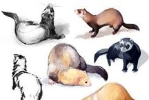 Ferrets / My animal inspiration