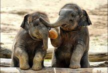 ...Elefantes...