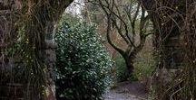 The Forgotten Garden / The Forgotten Garden by Kate Morton