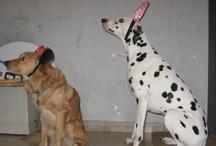 Luna yJanoj-dog love / Moda y otras cosas  -mis dos adorables perros / by concepcion vic