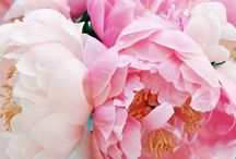 Floriana / Floral inspiration for a budding (pun intended) novice florist.
