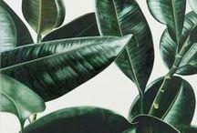 // Botanical