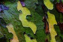 Tree Bark / by Suzanne Myers