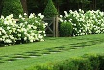 !..gardening..! / all kind of garden make us relax and get lost into the green..
