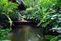 Garden & Water..!! / the perfect combination of equanimity..!!