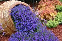 Hagetips / Tips til å pynte opp hagen :)