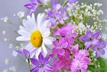 FLOWERS & FRUITS / FLORES & FRUTOS