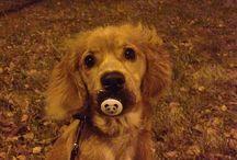 Ellie / Our loving dog