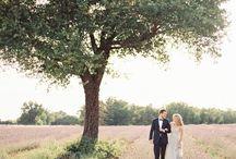 love in a lavender field