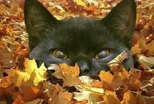 Halloween / by Sandra Marsh