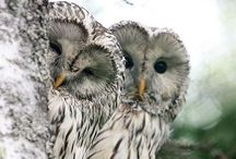 owlish. / owls have to be the most adorable birds ever.