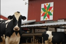 Quilt Blocks on Barns