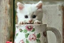 Cute Animals / Pictures of every kind of take your breath away cuteness!