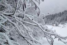 Wintersport / Sneeuw, winter en alles wat daar bij hoort