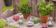 Bolsius Citronella Garden Kaarsen / In het Citronella Garden assortiment wordt de welbekende citronella-geur gecombineerd met kruiden basilicum, rozemarijn of citroengras. Consumenten zullen deze verrassende combinaties van frisse geuren zeker waarderen. Een vrolijk gekleurde collectie die prima past bij de 'eetbare tuin' en alle heerlijke, zelfgemaakte gerechten en producten die daaruit voortkomen.