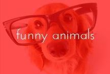FUNNY ANIMALS / by Lavalife