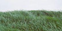 A WORLD FULL OF GREEN