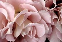 la vie en rose... / Toutes les nuances de rose...