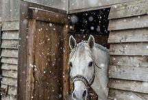 Horses / Stuff on horses as I luv horses!¡
