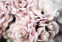 <Flora> / Floral lovelies :) / by ieva mazeikaite