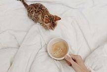 Comfy Cozy. / by Shianne Smelker